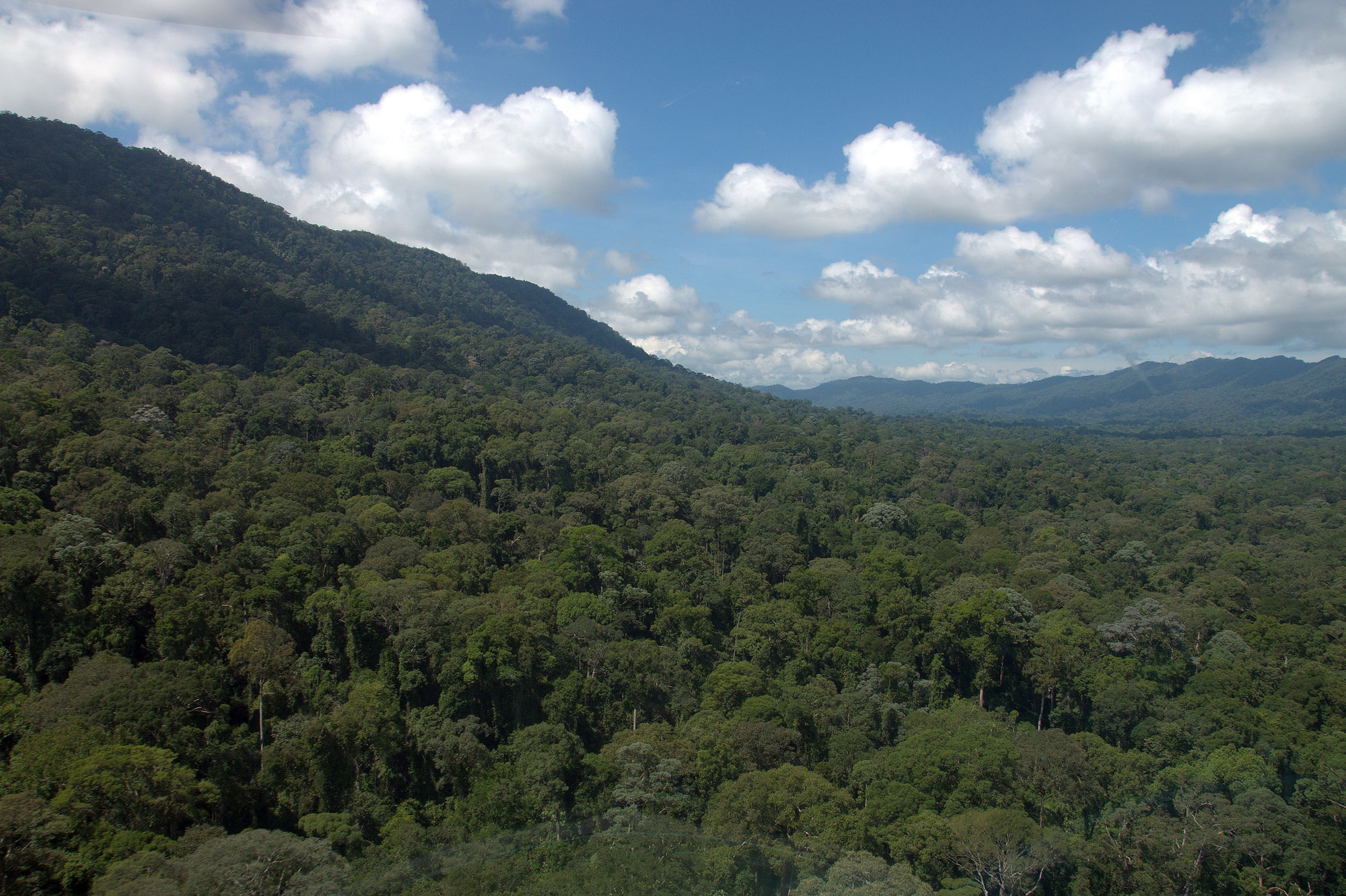 Supporting the Creation of a New Rainforest Protected Area in Malaysian Borneo