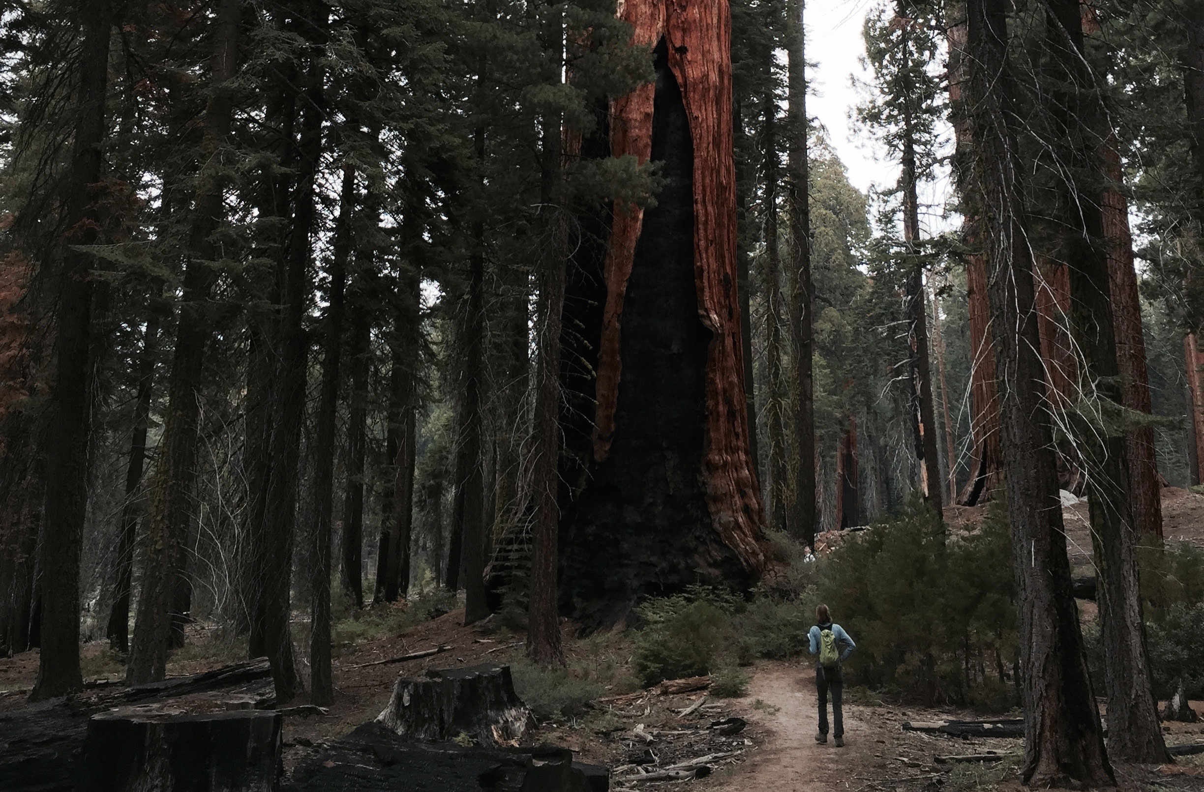 Studying Biodiversity and Carbon Storage in California's Forests