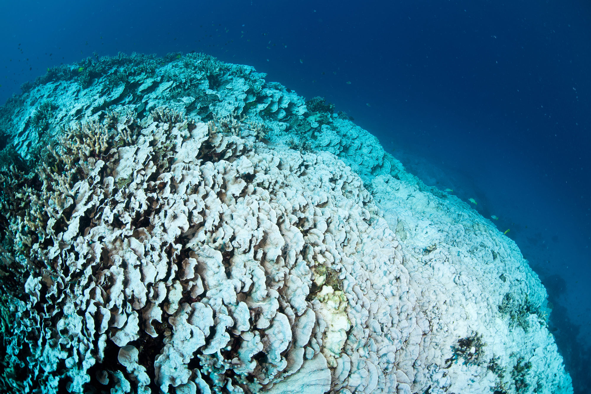 Allen Coral Atlas: An Initiative to Improve Coral Reef Management and Conservation
