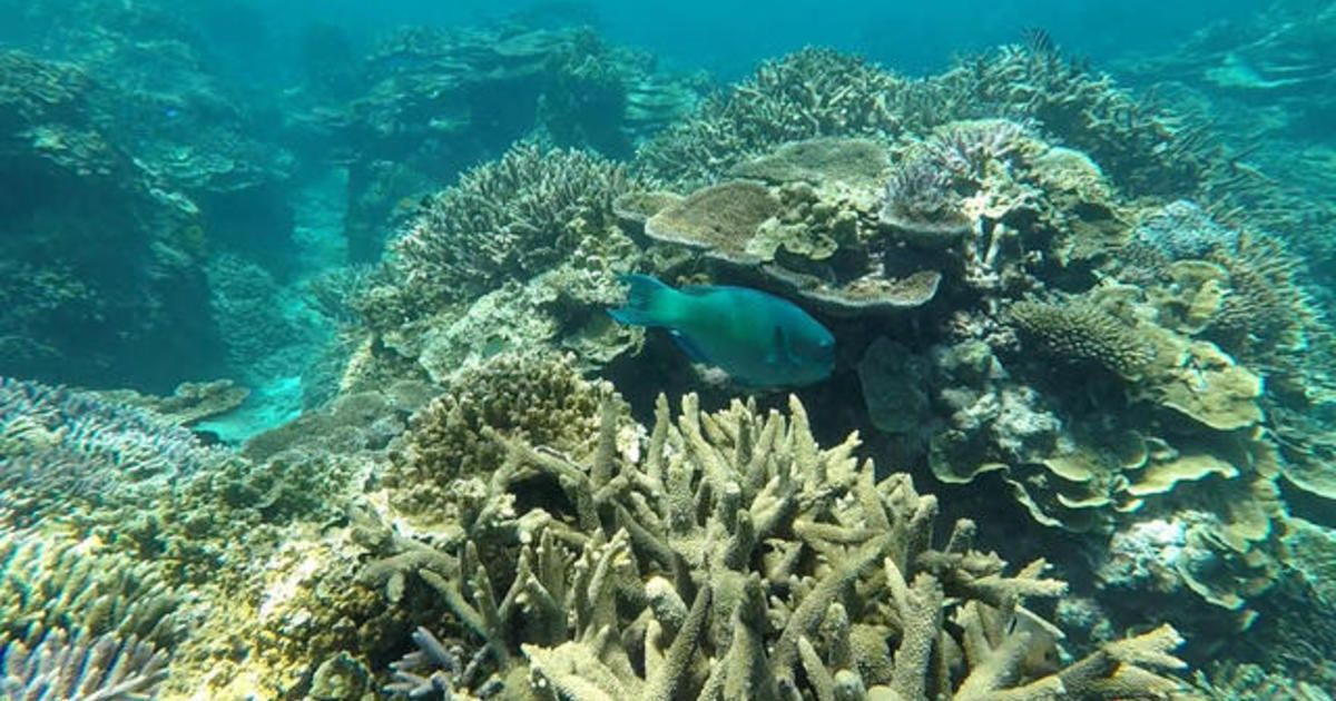 Climate Diaries on CBS News: mini-satellites help map Great Barrier Reef