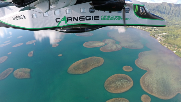 Observing ecology from a Dornier 228