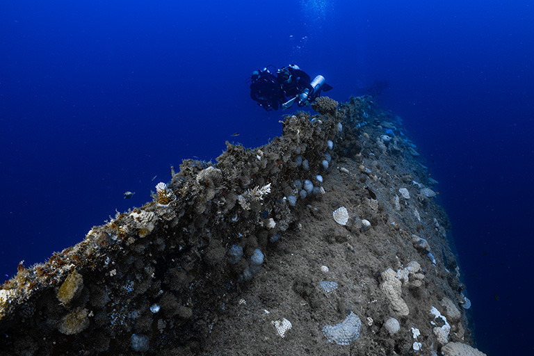 Guns, corals and steel: are nuclear shipwrecks a biodiversity hotspot?