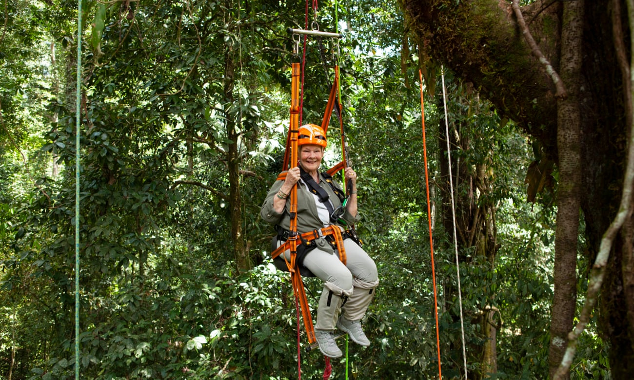 Judi Dench's Wild Borneo Adventure review – joy, awe and orangutans