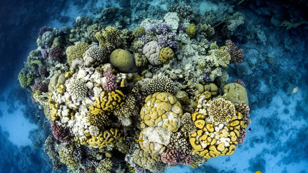 Coral bleaching: New AI project expects to map all the word's reefs by end of next year
