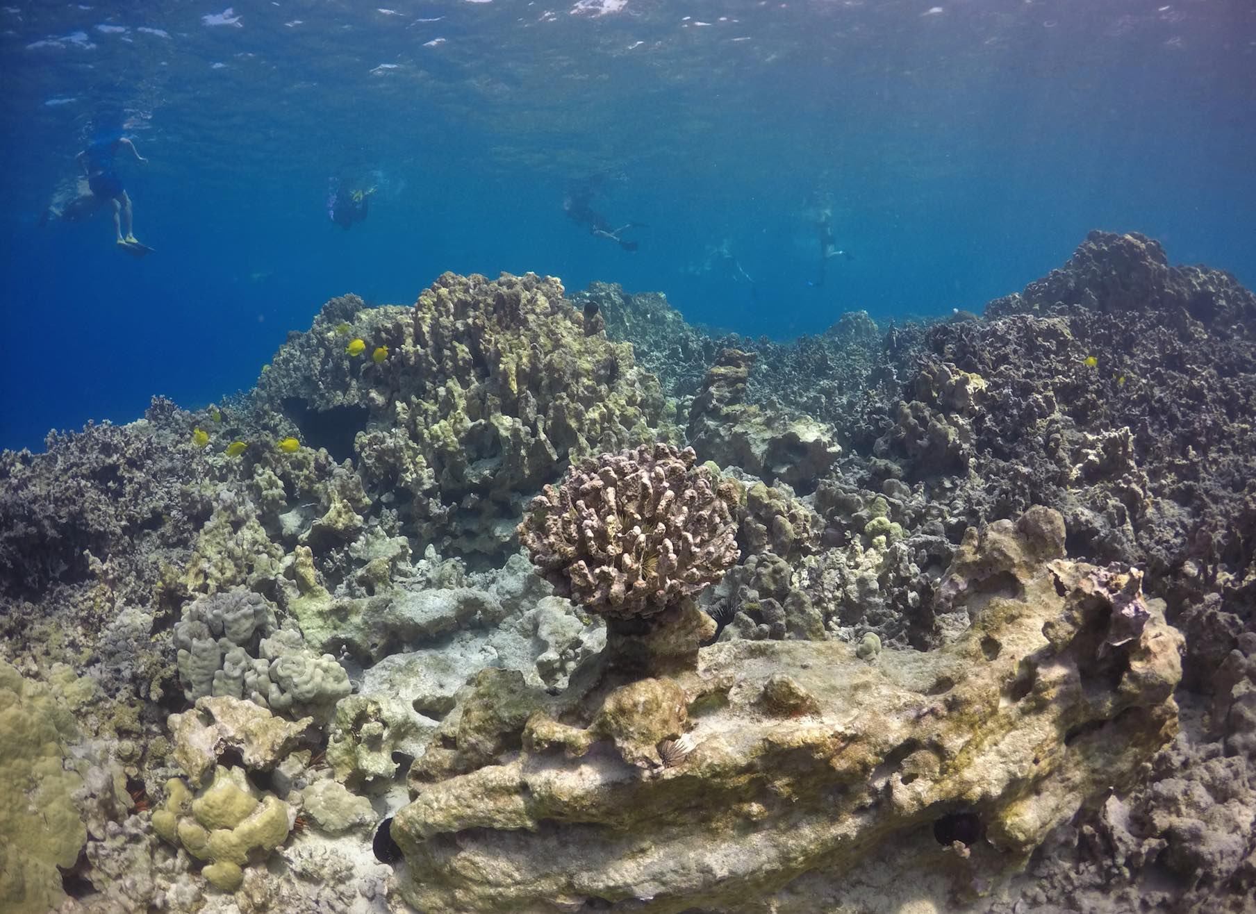 Sea temperature a critical factor in success of coral reef outplants