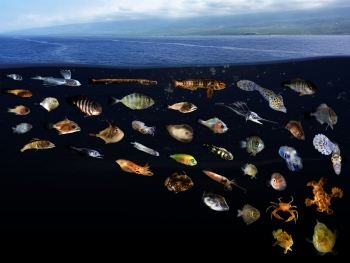 Scientists discover ocean 'surface slicks' are nurseries for diverse fishes
