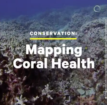 This is Why It's Important to Map Coral Health