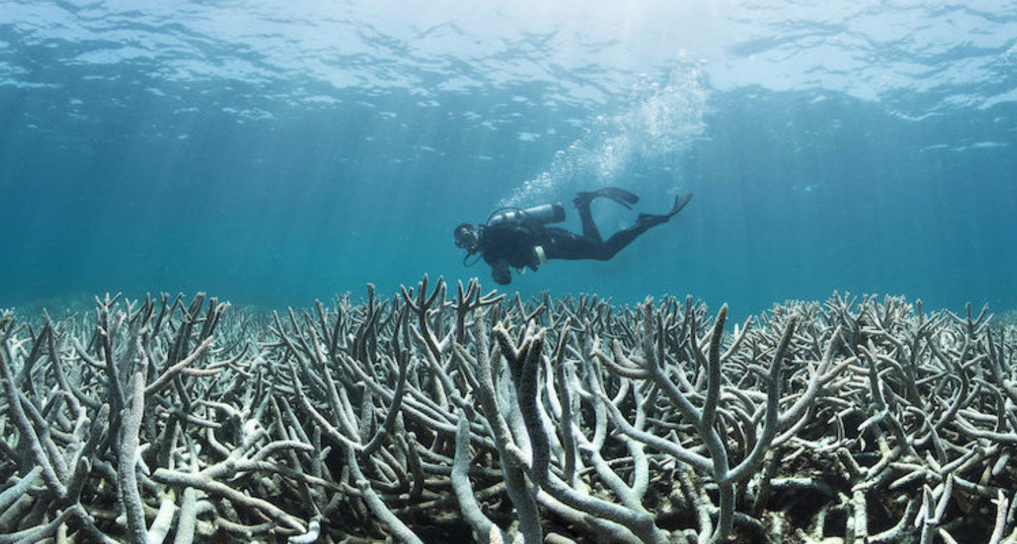Satellites keep watch over global reef health in a world first