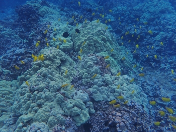 Scientists report new findings on the role that fish play in balancing coral, algae on reefs